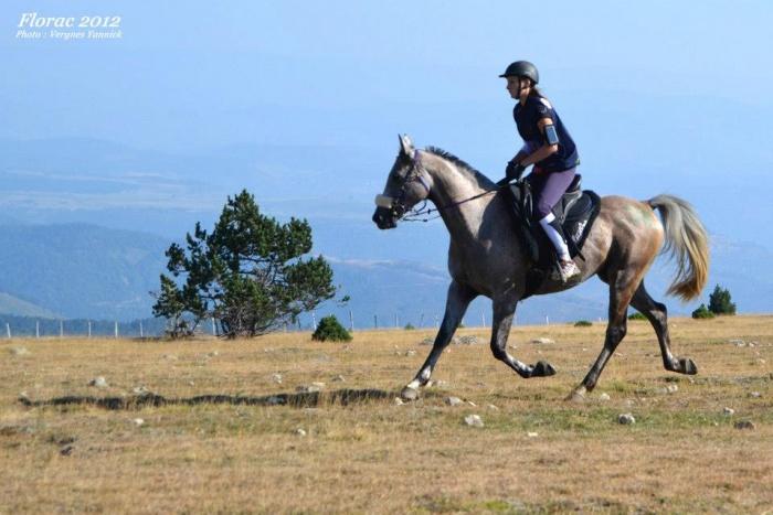 rencontre equitation