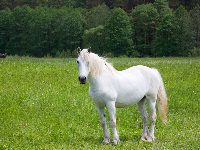 Concours equitation seine et marne