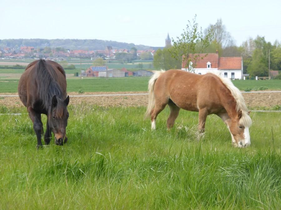 pension cheval poney p tures curie priv e. Black Bedroom Furniture Sets. Home Design Ideas