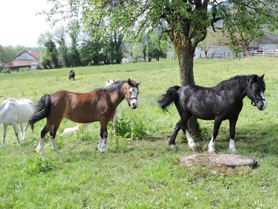 poney 74