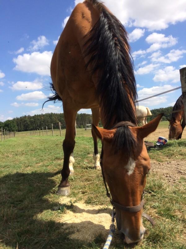 Rencontres equestres