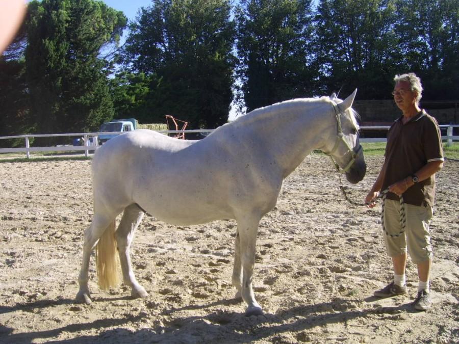 cheval espagnol a vendre gard