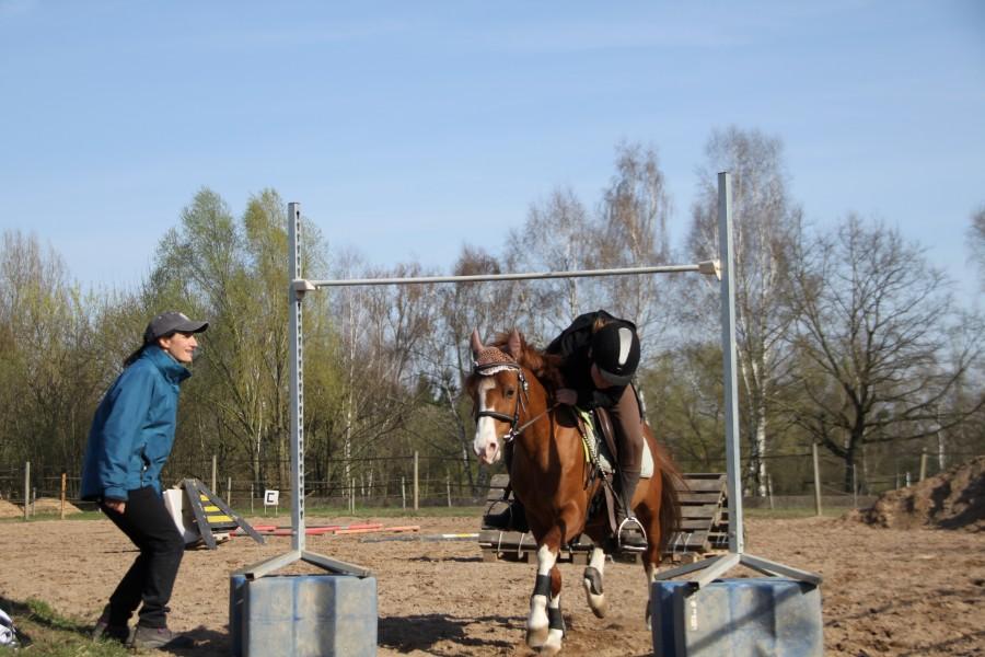 centre equestre 12