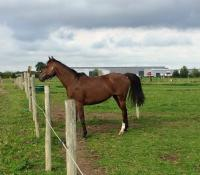 Vente de cheval : Tip top lady