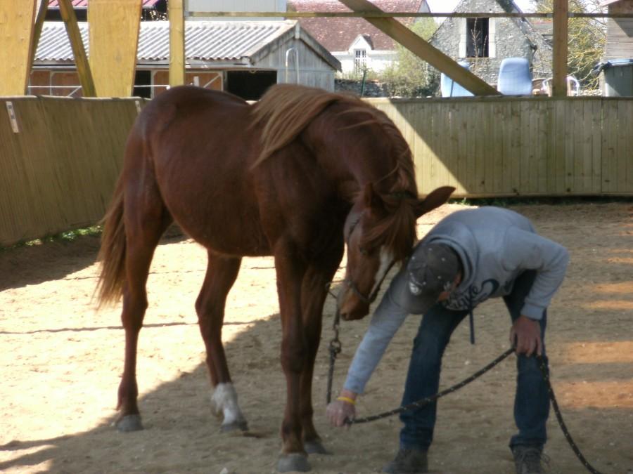 centre equestre blere