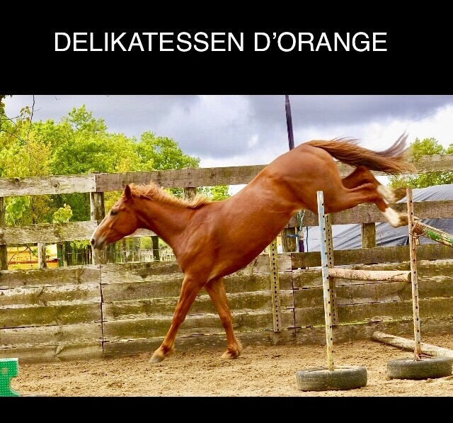 Vente de cheval : Delikatessen d?Orange