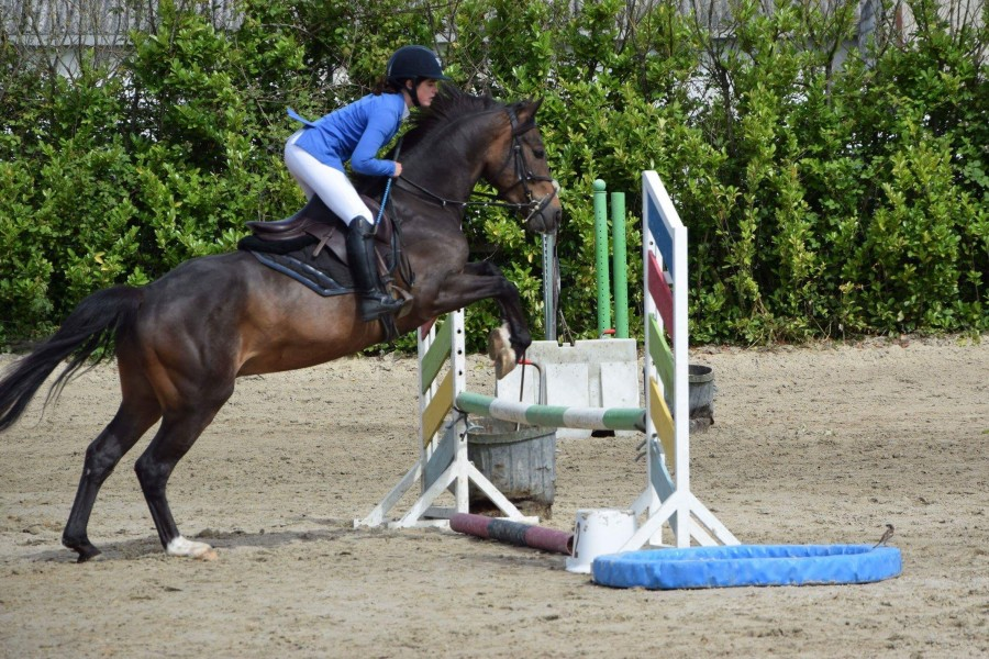poney 4 ans a vendre