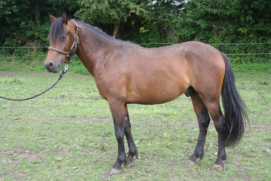 poney 2 ans