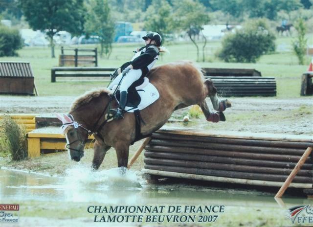 cheval de trait saut d'obstacle