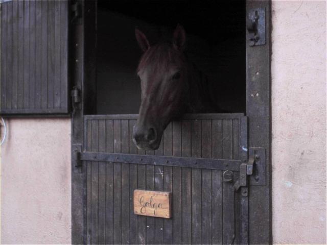 Plaque Décurie - Porte box chevaux