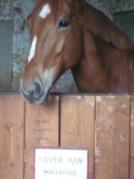 Photos de chevaux - Frison qui saute ...