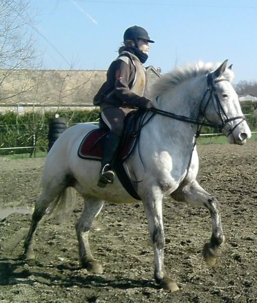 Quelle couleur de tapis pour cheval gris - Quelle couleur avec du gris ...