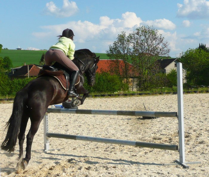 Bonjour comment prendre un cheval qui saute - Cheval qui saute dessin ...