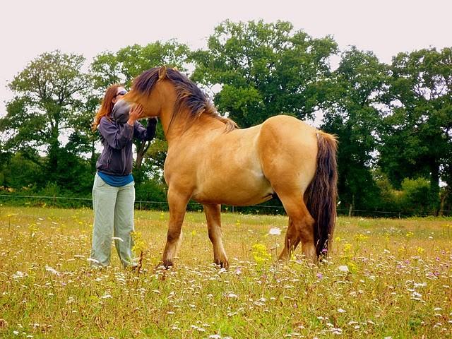 cheval espagnol croise selle francais