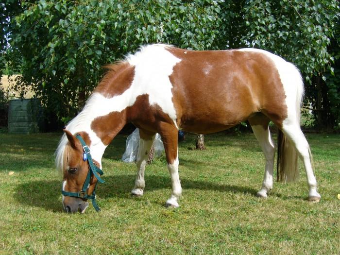 poney 0 donner
