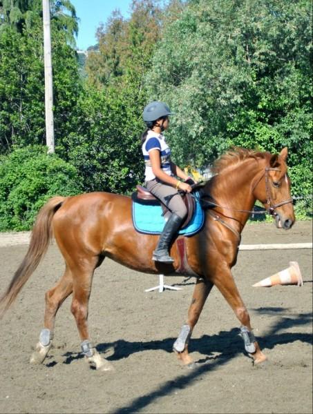 Turquoise ou vert pomme pour alezan Tapis cheval vert pomme
