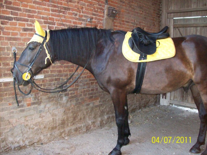 poney d taille