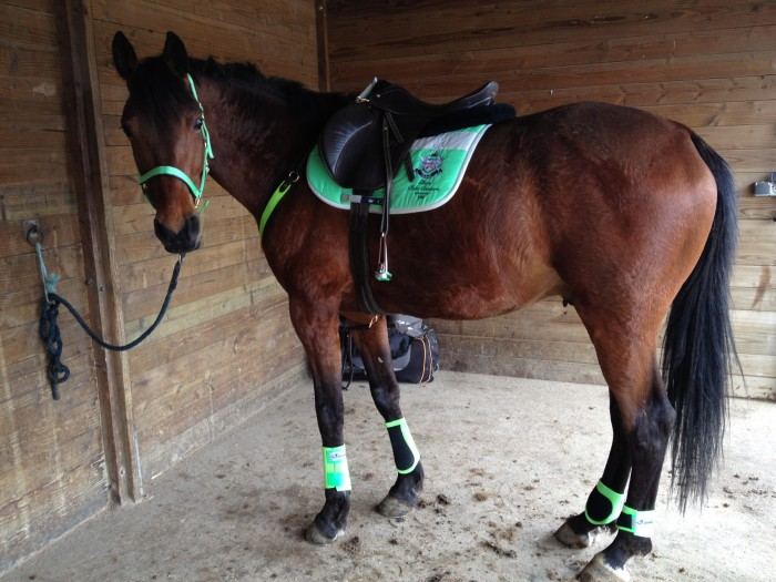 Vos quipements sur chevaux bai Tapis cheval vert pomme
