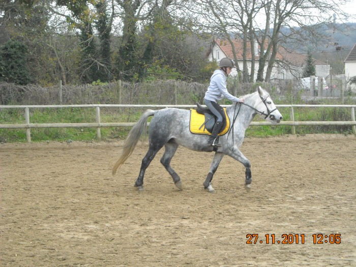 quelle couleur pour cheval gris pommel u00e9