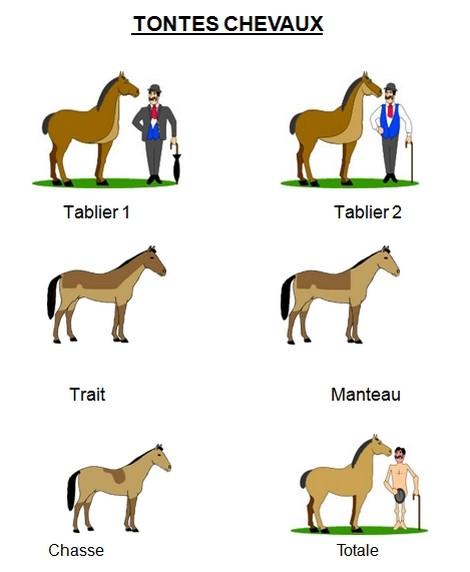 Tondre le cheval for Tarif pour tondre une pelouse