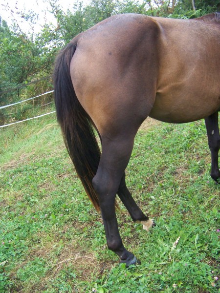 Semilly saulcis levage de sf et poneys de sport - Hematome jambe suite coup ...