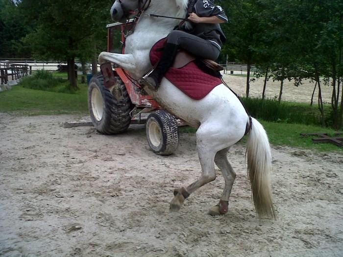 Il cabre - Coloriage cheval qui se cabre ...