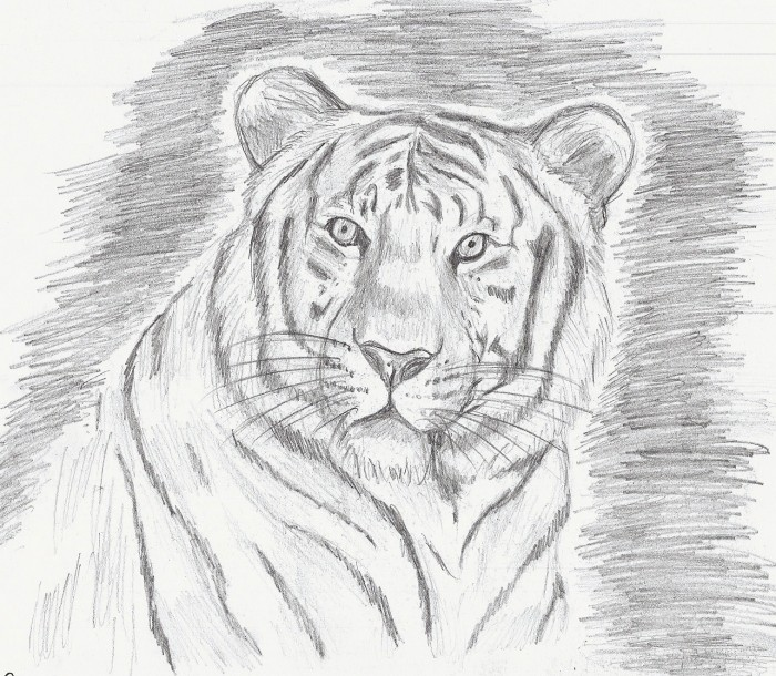 Post des artistes - Dessin de tigre facile ...