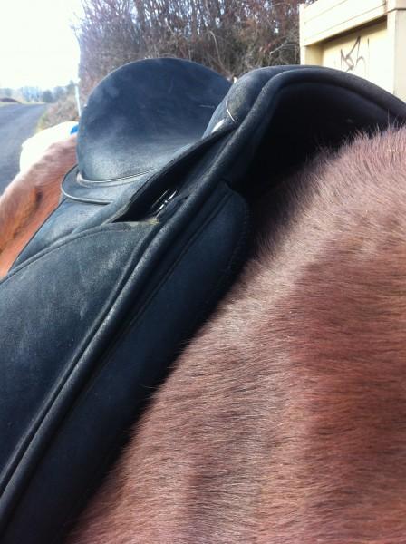 cheval qui essaye de mordre