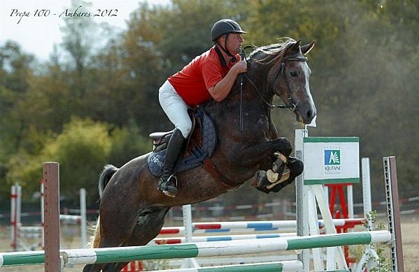 cheval arabe qui saute