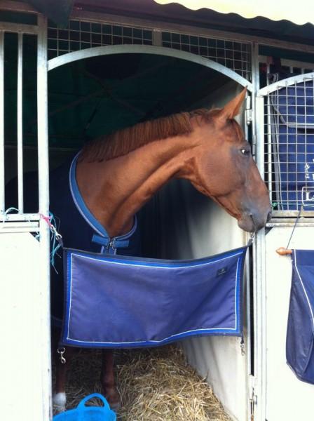 Avis porte de box tissu pour concours - Porte de box pour chevaux a vendre ...
