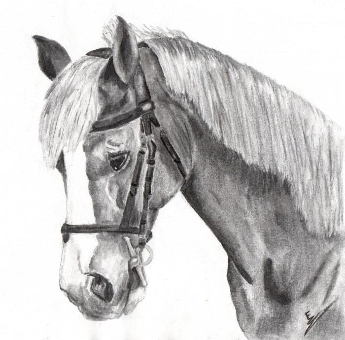 Concours dessin - Dessins de chevaux facile ...