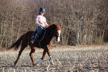 La race Quarter Horse Inaroun-2db7026dd65718b15f38fe9edb1755d1-thumb