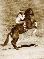 La race Quarter Horse Inaroun-9ee149062d9bea155533b0765fd6889b1-thumb