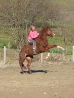 La race Quarter Horse Inaroun-b156e589582325e089dd4810dfe651e41-thumb