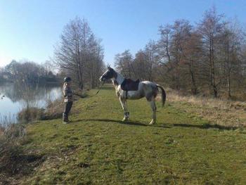 La race Quarter Horse Inaroun-da86afd1f4dd11a5a266f4970a586814-thumb