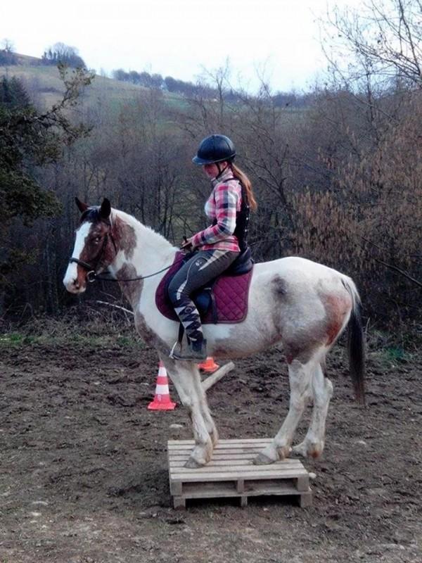 La race Quarter Horse Inaroun-b9a99e532e99a21dbb37fb0562fef9cb