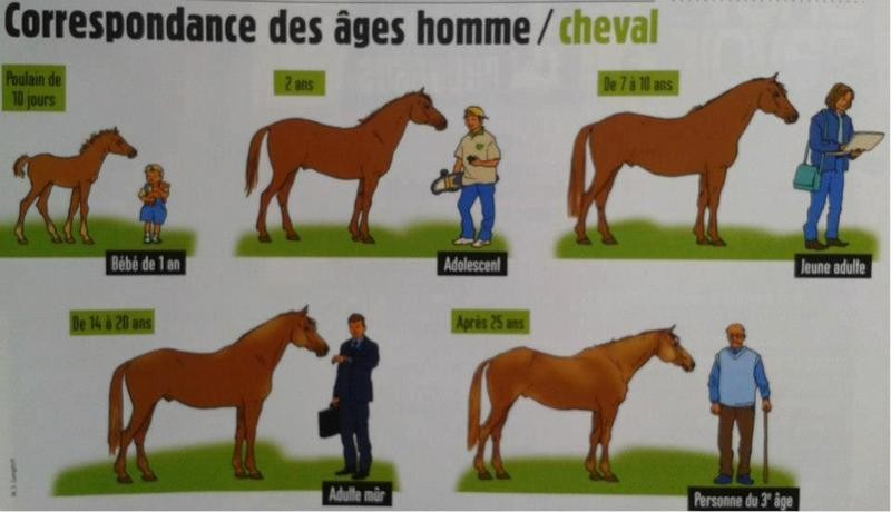 photo cheval humain