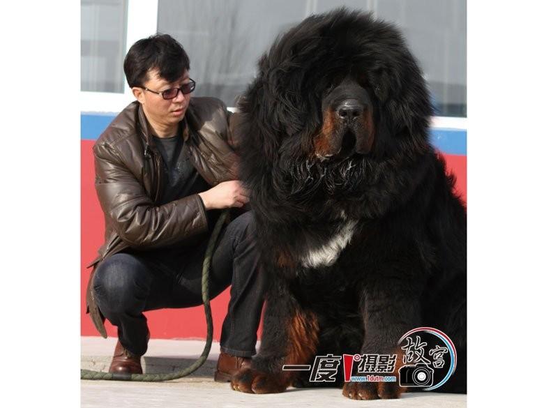 Bekannt Question dogue du tibet EW17