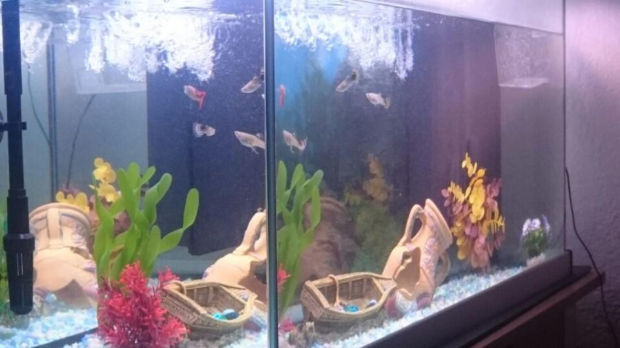 aquarium et poissons pour d butant. Black Bedroom Furniture Sets. Home Design Ideas