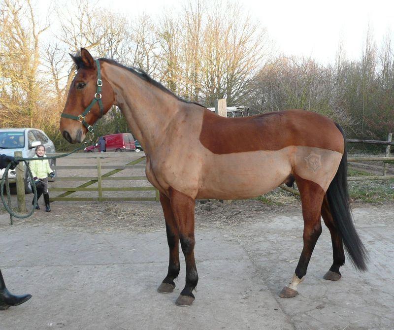 Tondre un cheval au pr for Tarif pour tondre une pelouse