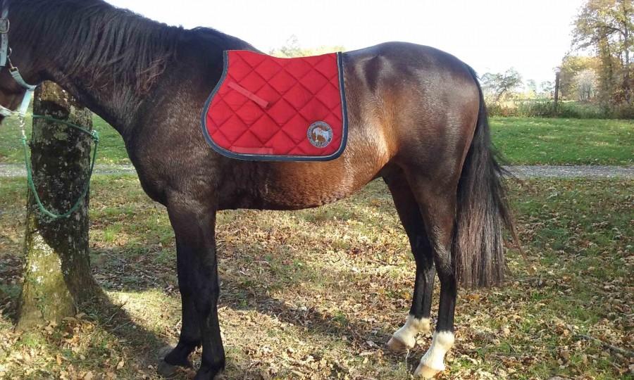 tapis de selle adapt au cheval. Black Bedroom Furniture Sets. Home Design Ideas
