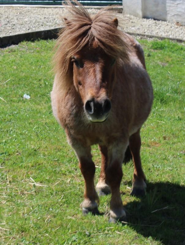 poney age