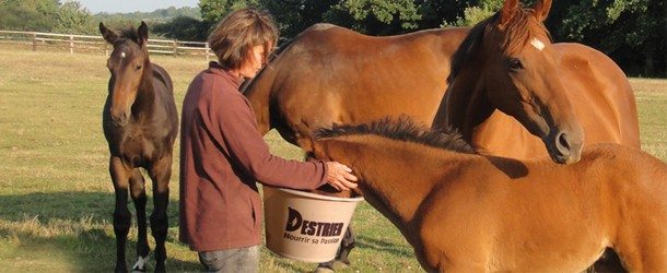 Cheval Alimentation Manger