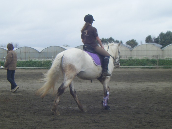 Quelle couleur choisir pour mon cheval bai gris for Quelle couleur de tapis pour mon salon
