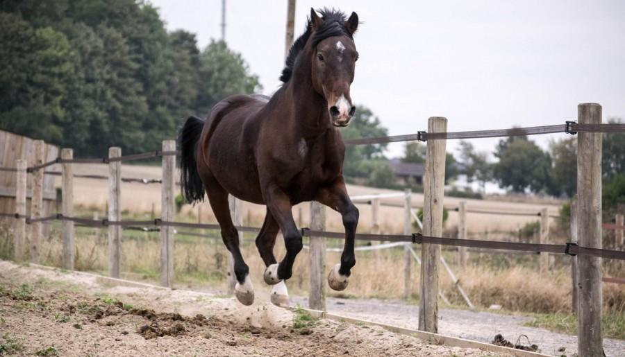 La vie, après le cheval de ma vie.