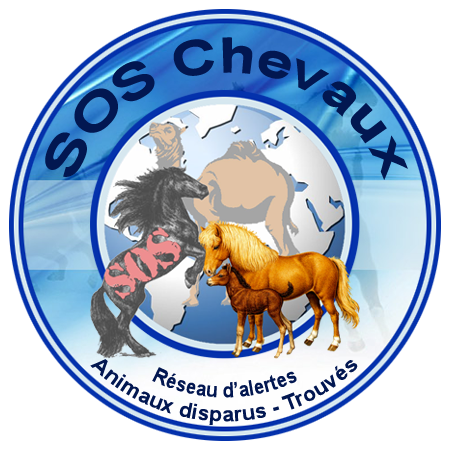 Photo de profil de topchevaux