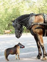 centre equestre orleans la source