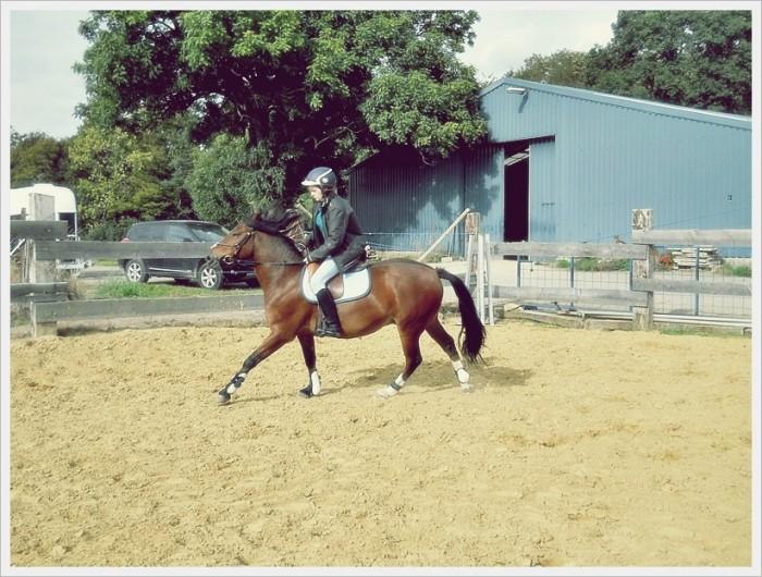 Jusqu 39 a quel age un cheval peut il travailler - Jusqu a quel age peut on emprunter ...