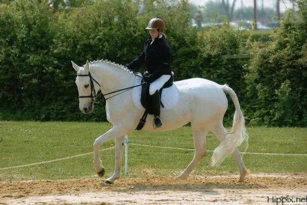 site de rencontres cheval Versailles